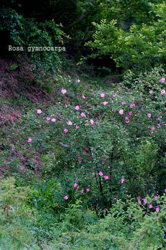 2010_0604_174139-1.jpg
