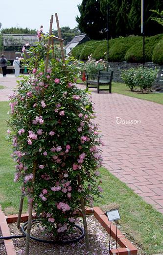 2011_0513_123811-1.jpg