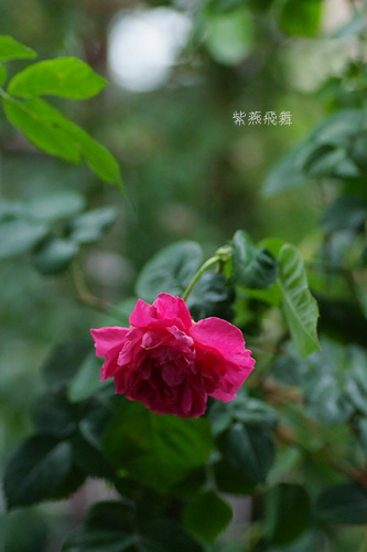 2011_0523_153700-1.jpg