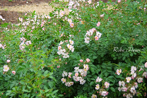 2011_0602_164412-1.jpg
