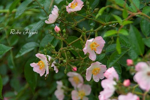 2011_0602_164551-1.jpg