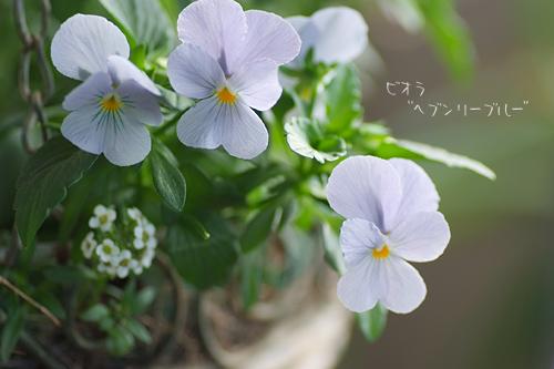 2011_1213_100150-1.jpg