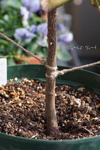 2012_0122_132052-1.jpg