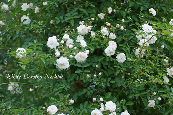 2012_0602_113407-1.jpg