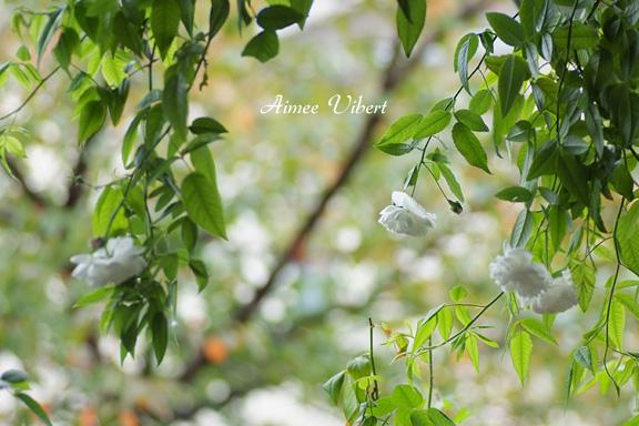2012_1028_095811-1.jpg