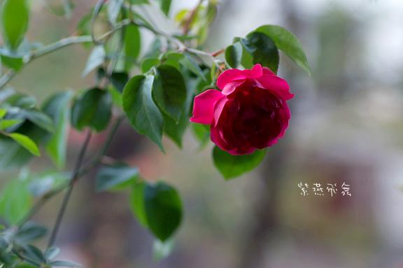 2012_1110_082112-1.jpg