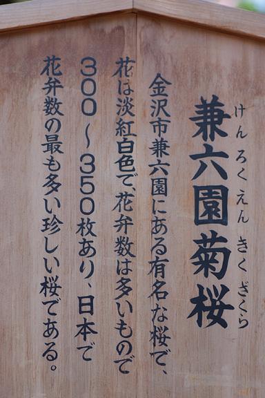 2013_0418_121755-1.jpg