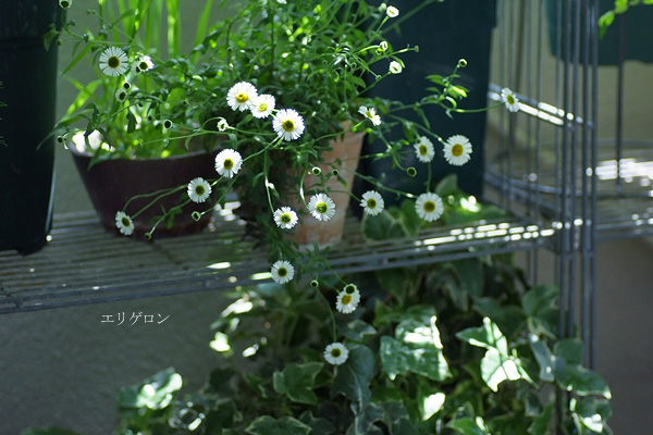 2014_0419_141401-1.jpg