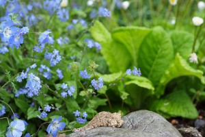 フォトギャラリー 花壇2014 春