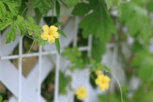 フォトギャラリー 花壇2014 夏